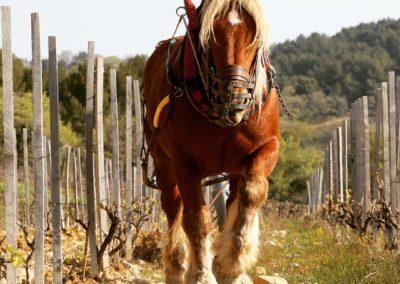labour-cheval-001